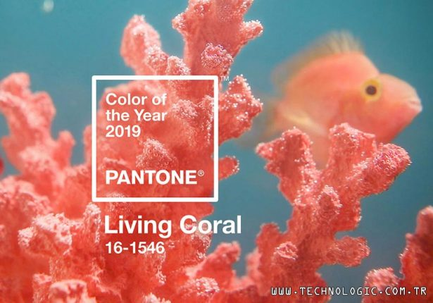 Pantone Canli Mercan Living Coral