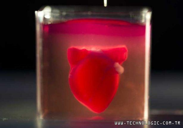 kalp 3 boyutlu yazici
